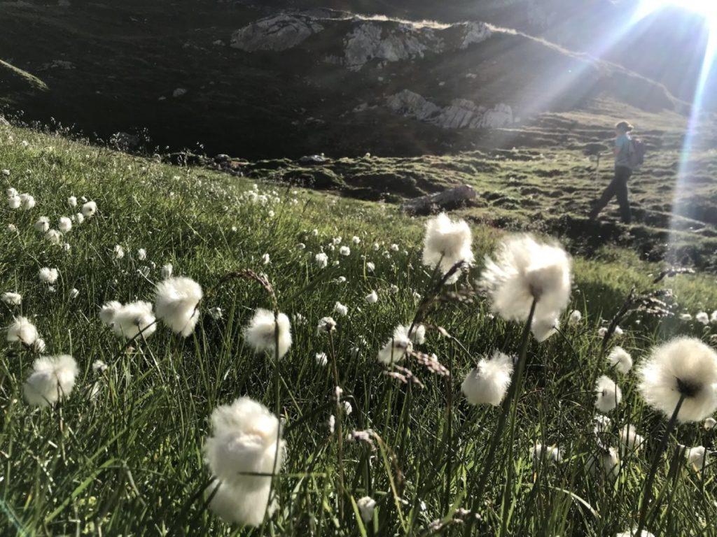 Rofanspitze wandern - mit dem schönen Wollgras in der Senke